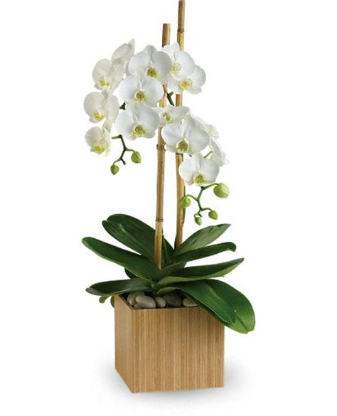 orchid plant floral blog with fun tips ideas teleflora