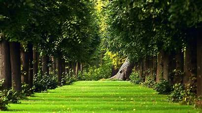 Landscaping Landscape Rtj Care Lawn Maintenance Owned