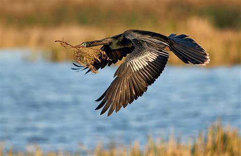 birds as art 2nd international bird photography