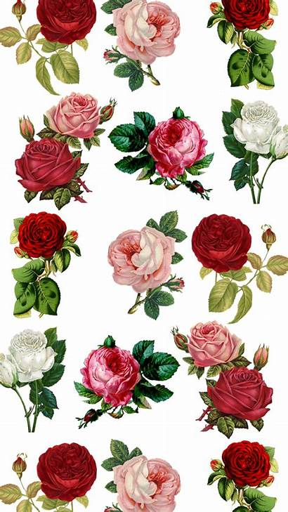 Iphone Rose Floral Wallpapers Plus Flower Roses