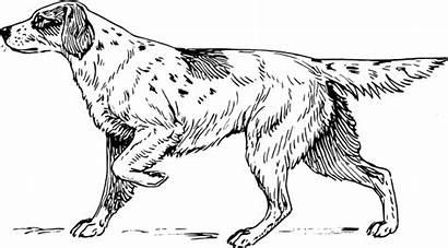 Setter Dog English Hound Clipart Animal Svg
