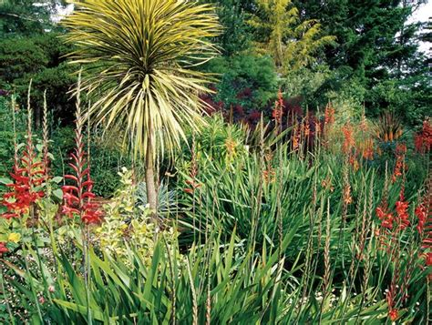 mediterranean plants and trees mediterranean plants to grow in your garden garden design