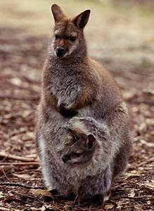 Opinions on pouch marsupial