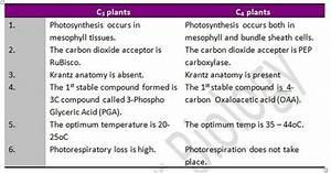 C3 Vs C4 Plants Leaf Anatomy
