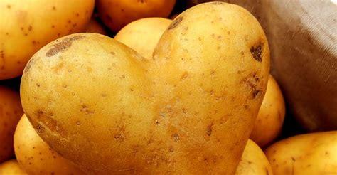 la pomme de terre un légume fondamental dossier