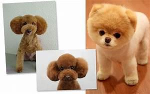 Dog Breed That Looks Like A Teddy Bear