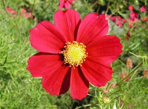maserati granturismo 2016 red cute red flower weneedfun