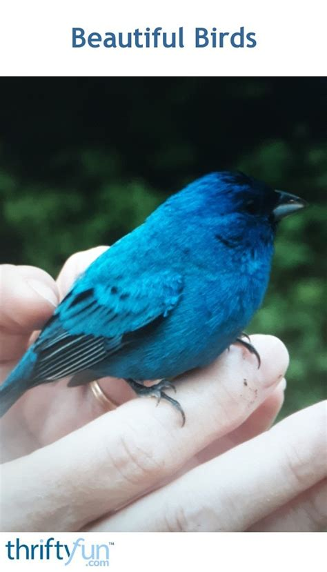 Beautiful Birds Thriftyfun