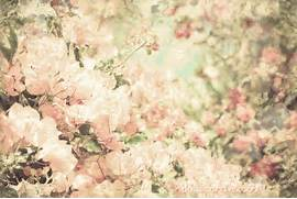 Tumblr Backgrounds Vin...Vintage Flowers Tumblr