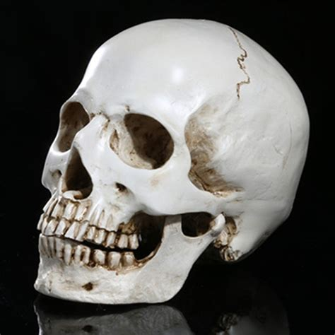 medical teaching skull separable skeleton head resin