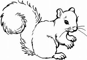 Free Squirrel Coloring Pages