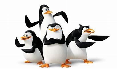 Madagascar Penguins Penguin Transparent Clipart Bx Janeiro