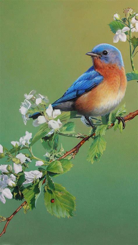 birds wallpaper android hd wallpaper beautiful birds