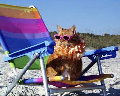 cat naps   beach sigma kappa leadership consultants
