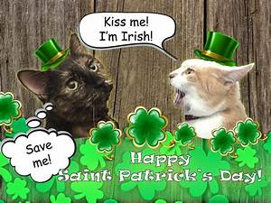The Cuddlywumps Cat Chronicles: Happy Saint Patrick's Day ...