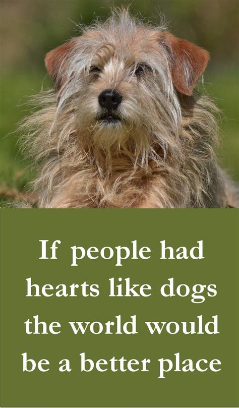 27 Beautiful Dog Quotes  Some Touching, Some Poignant