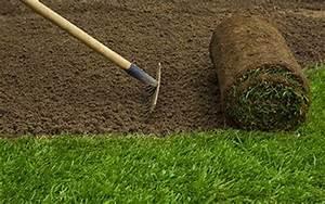 Gazon En Rouleaux : gazon naturel en rouleau x 1m2 plantes et jardins ~ Melissatoandfro.com Idées de Décoration
