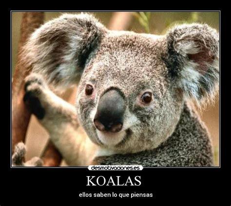koalas desmotivaciones