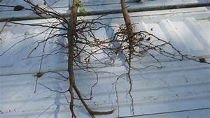 Crop Nematode Damage a Serious Issue this Season ...