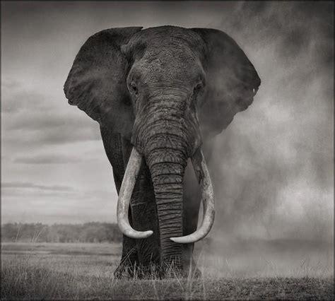 nick brandt portrait  elephant  dust amboseli