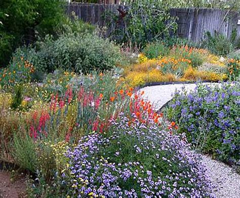 california plant gardens california native plants garden tips coloradoboulevard net