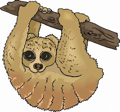 Sloth Clipart Clip Toed Three Cliparts Hanging