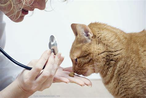 erste hilfe bei katzen katzen lieben feliway