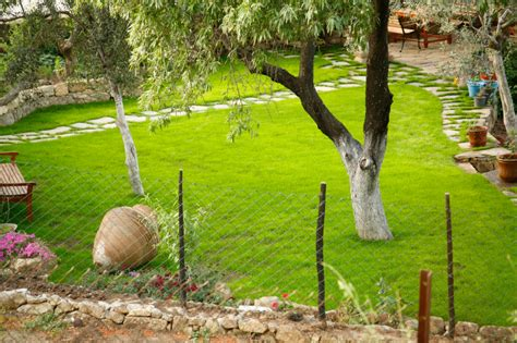 Olivenbaum Im Garten Pflanzen » Geht Das?