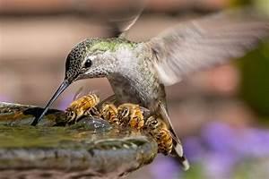 35 Award Winning Wildlife Animal Photography Examples Of 2017