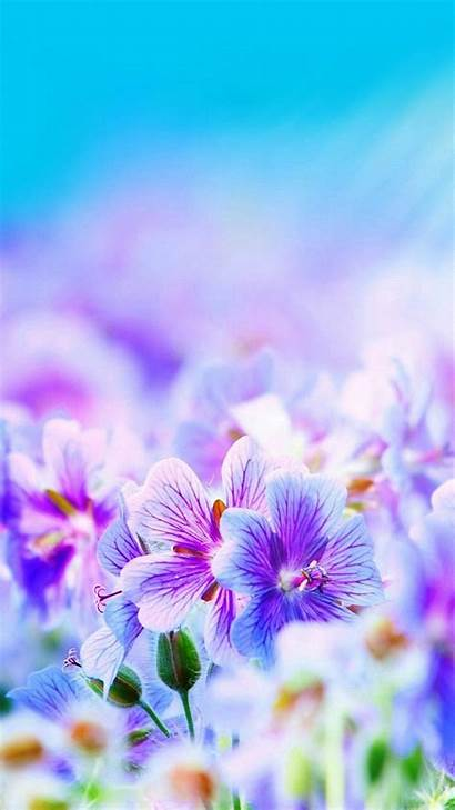 Backgrounds Pretty Wallpapers Iphone Flowers Purple Really