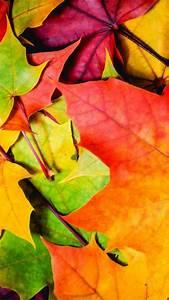 Wallpaper, Leaves, 5k, 4k, Wallpaper, 8k, Colorful, Autumn