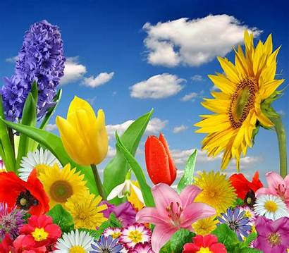 Flower Bright Colorful Spring Flowers Butterfly Blossom