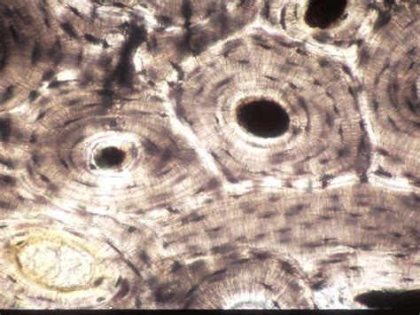 Quia - Tissue Types