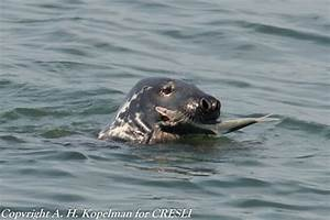 Image Gallery Seals Eating
