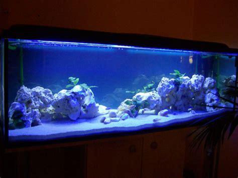 Barschis Malawi Becken   Aquarium Forum