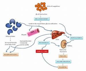 Pathophysiology Of Type