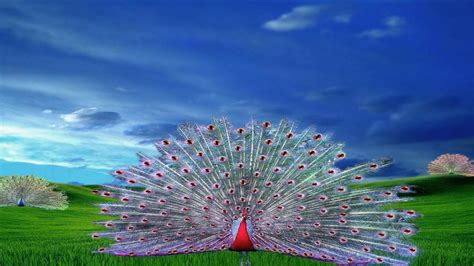 Peacock Hd Wallpapers Download 3d