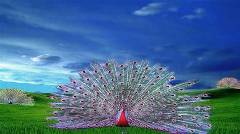 Peacock hd wallpapers download 3d