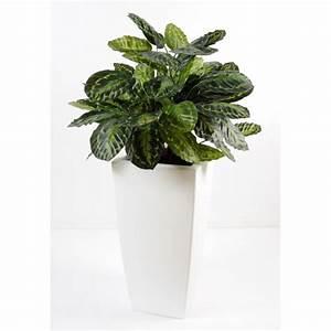 Pot De Fleur Artificielle : calathea en pot pure haut composition artificielle fleurs plantes artificielles ~ Teatrodelosmanantiales.com Idées de Décoration