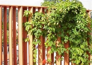 Sichtschutzelemente Aus Holz : sichtschutz holz toom baumarkt ~ Sanjose-hotels-ca.com Haus und Dekorationen