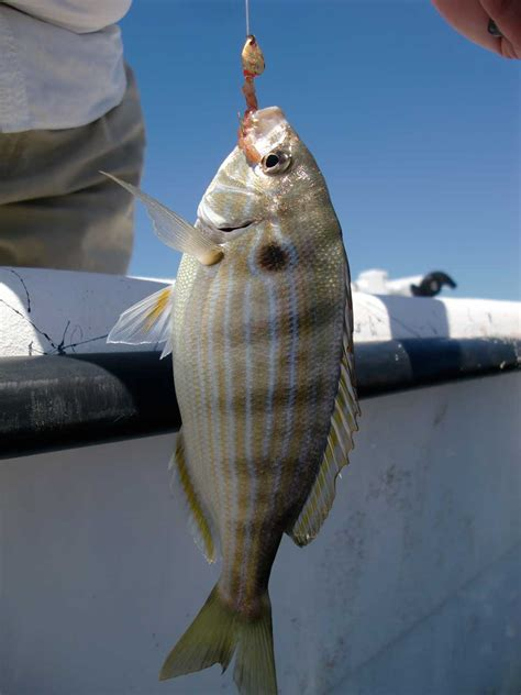 obx fishing recreational  catch soundside adventures