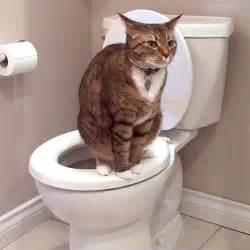 cat pooping anorak no education blackpool missed school