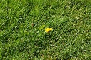 Unkrautbekämpfung Im Rasen : garden bloggers bloom day mai 2013 wir sind im garten ~ Eleganceandgraceweddings.com Haus und Dekorationen