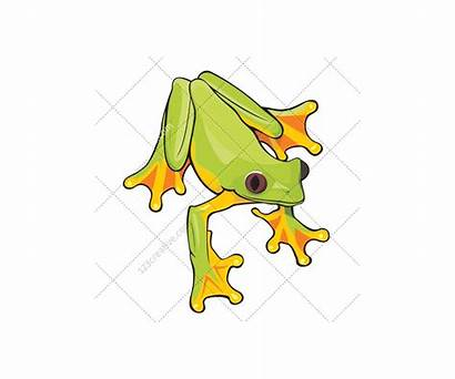 Vector Frog Pack Vectors Commercial Graphic Packs