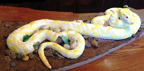 pin burmese python cake ideas  designs