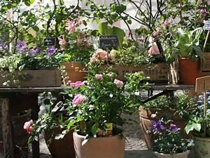 Blumen Für Schattigen Balkon : anna blumenladen balkonbepflanzung berlin ~ Orissabook.com Haus und Dekorationen