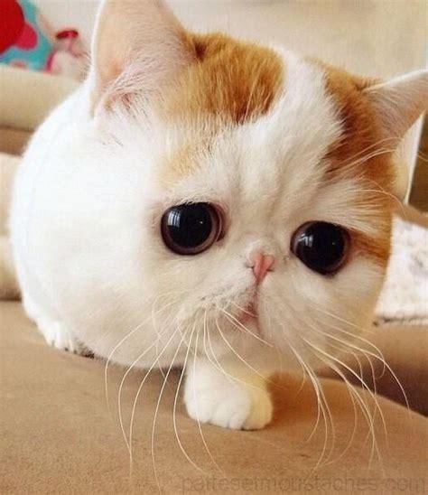 photos de chatons trop mimi photos de nos animaux