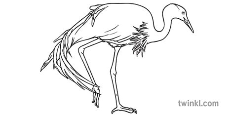 zils celtnis putns dzīvnieks dienvidāfrikas putni atvērtas ...