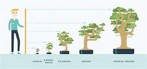 Bonsai For Beginners  The Definitive Guide