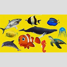 Learn Sea Animals Amazing  Sea Animals Names And Sounds For Kids  Kids Channel Learn Animal